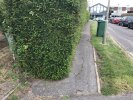 Hedge taking over pavement