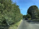 Hedge Restricting road Width, blocking Signs