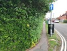 Overgrown hedge restricting use of pavement
